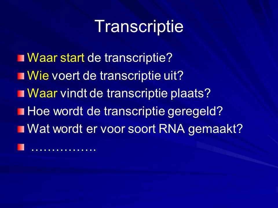 Transcriptie Waar start de transcriptie? Wie voert de transcriptie uit? Waar vindt de transcriptie plaats? Hoe wordt de transcriptie geregeld? Wat wor