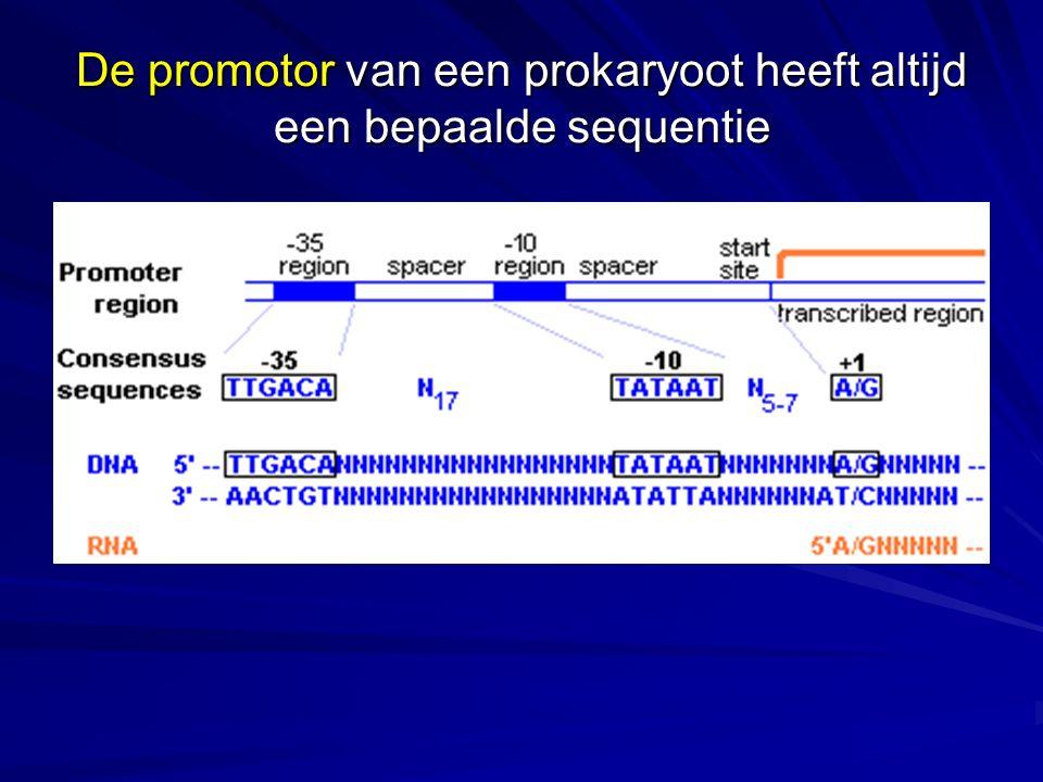 De promotor van een prokaryoot heeft altijd een bepaalde sequentie