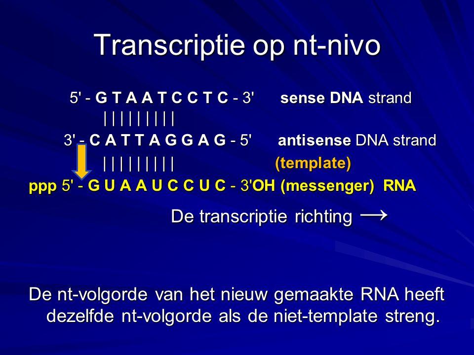 Transcriptie op nt-nivo 5' - G T A A T C C T C - 3' sense DNA strand | | | | | | | | | 5' - G T A A T C C T C - 3' sense DNA strand | | | | | | | | |