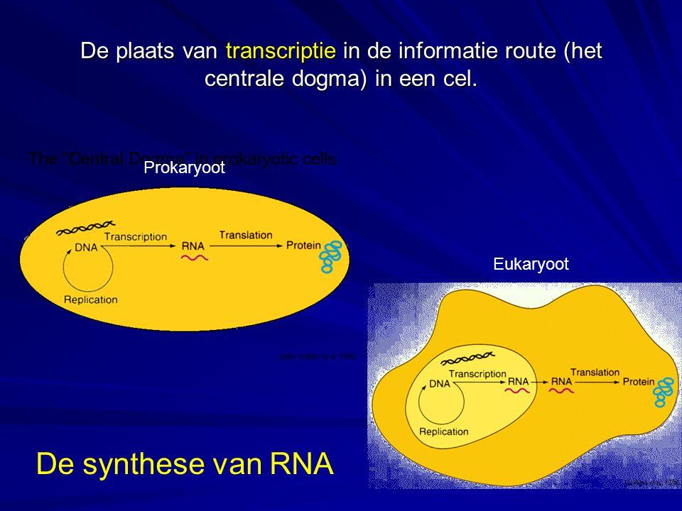 De plaats van transcriptie in de informatie route (het centrale dogma) in een cel.