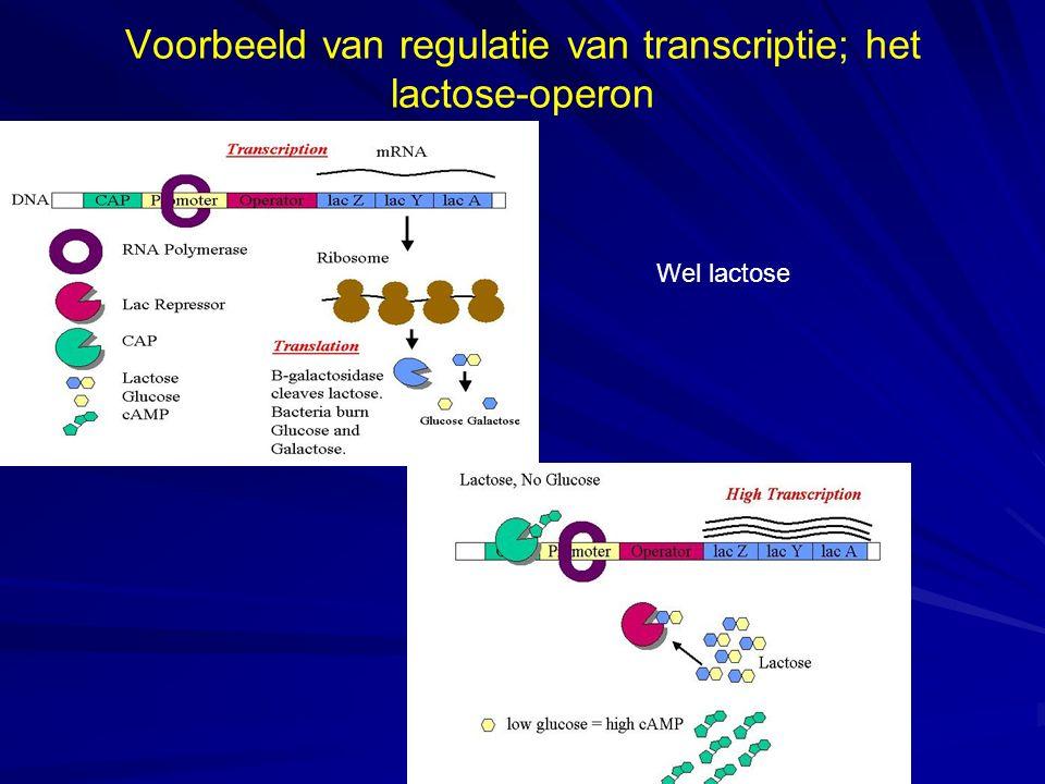 Voorbeeld van regulatie van transcriptie; het lactose-operon Wel lactose