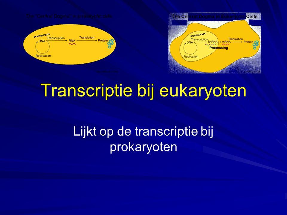 Transcriptie bij eukaryoten Lijkt op de transcriptie bij prokaryoten