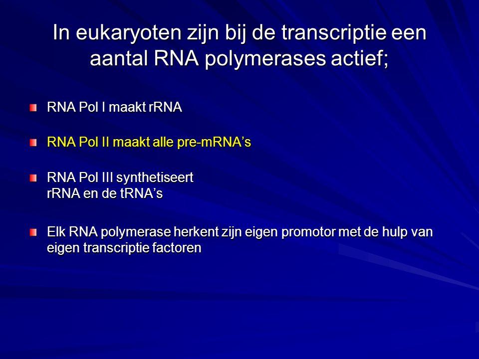 In eukaryoten zijn bij de transcriptie een aantal RNA polymerases actief; RNA Pol I maakt rRNA RNA Pol II maakt alle pre-mRNA's RNA Pol III synthetiseert rRNA en de tRNA's Elk RNA polymerase herkent zijn eigen promotor met de hulp van eigen transcriptie factoren