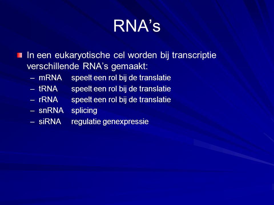 RNA's In een eukaryotische cel worden bij transcriptie verschillende RNA's gemaakt: – –mRNAspeelt een rol bij de translatie – –tRNAspeelt een rol bij de translatie – –rRNAspeelt een rol bij de translatie – –snRNAsplicing – –siRNAregulatie genexpressie