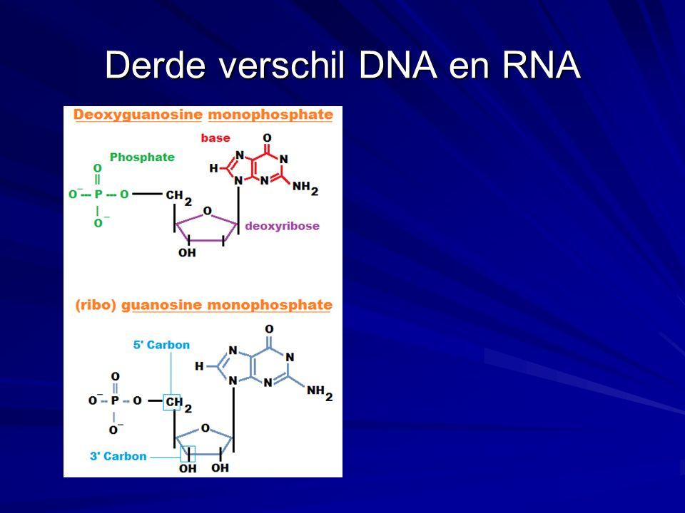 Transcriptie op nt-nivo 5 - G T A A T C C T C - 3 sense DNA strand | | | | | | | | | 5 - G T A A T C C T C - 3 sense DNA strand | | | | | | | | | 3 - C A T T A G G A G - 5 antisense DNA strand 3 - C A T T A G G A G - 5 antisense DNA strand | | | | | | | | | (template) | | | | | | | | | (template) ppp 5 - G U A A U C C U C - 3 OH (messenger) RNA De transcriptie richting → De nt-volgorde van het nieuw gemaakte RNA heeft dezelfde nt-volgorde als de niet-template streng.