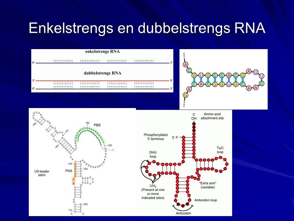 DNA-RNA binding DNA-RNA hybridisatie