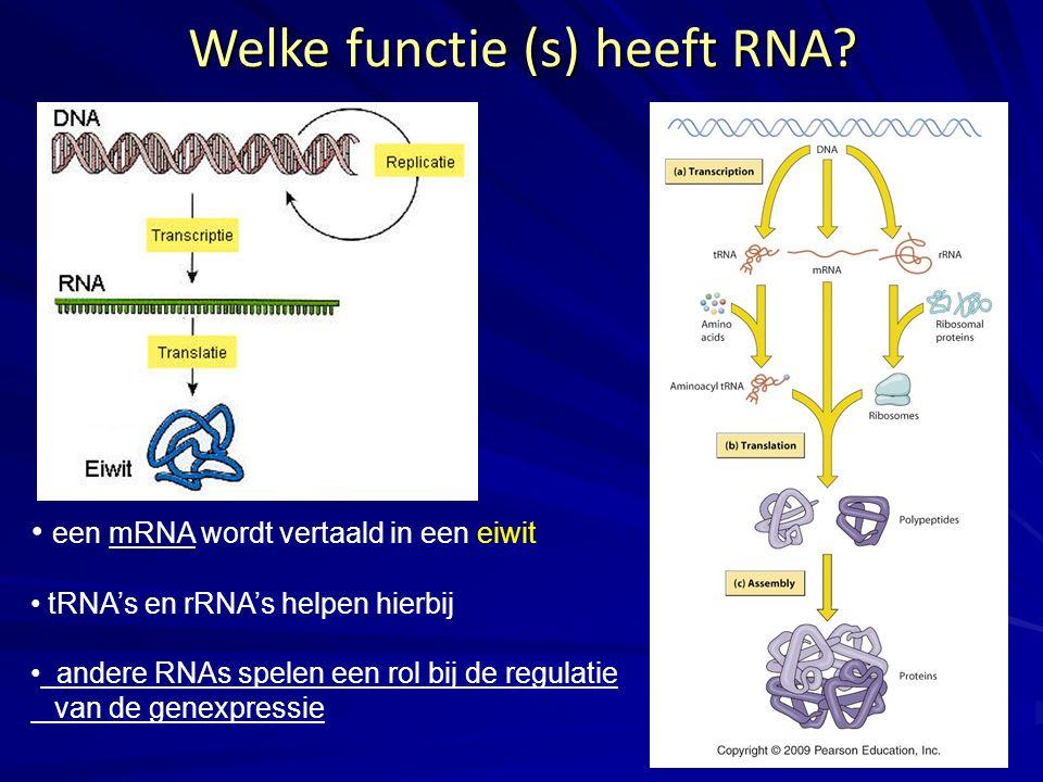Welke functie (s) heeft RNA? een mRNA wordt vertaald in een eiwit tRNA's en rRNA's helpen hierbij andere RNAs spelen een rol bij de regulatie van de g