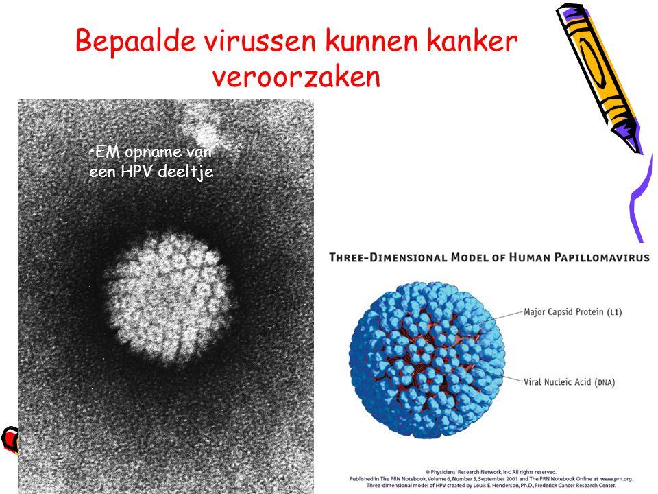 Bepaalde virussen kunnen kanker veroorzaken EM opname van een HPV deeltje