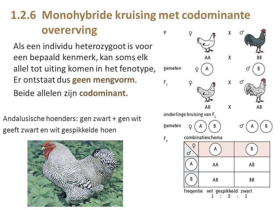 1.2.6 Monohybride kruising met codominante overerving Als een individu heterozygoot is voor een bepaald kenmerk, kan soms elk allel tot uiting komen in het fenotype, Er ontstaat dus geen mengvorm.