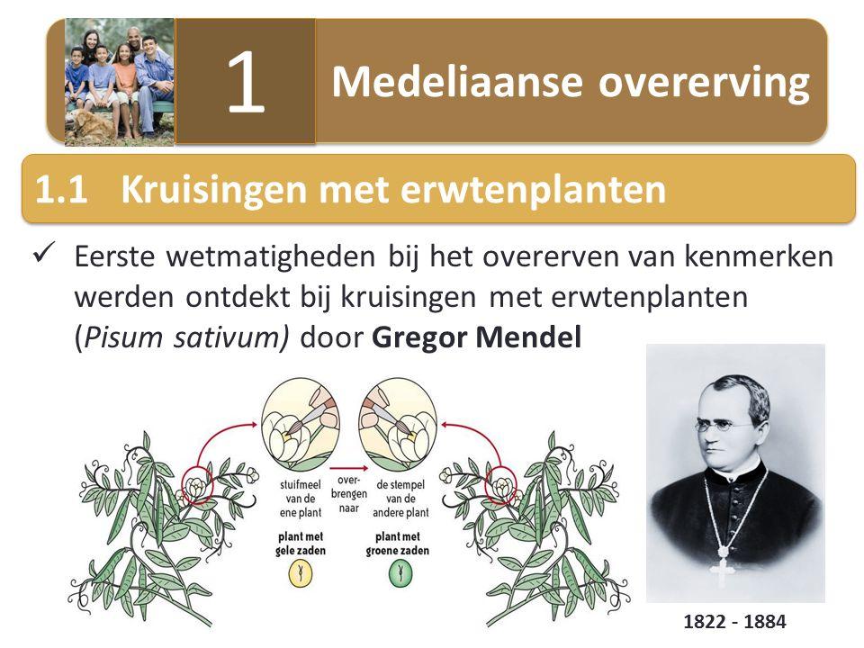 Eerste wetmatigheden bij het overerven van kenmerken werden ontdekt bij kruisingen met erwtenplanten (Pisum sativum) door Gregor Mendel 1.1Kruisingen met erwtenplanten Medeliaanse overerving 1 1 1822 - 1884