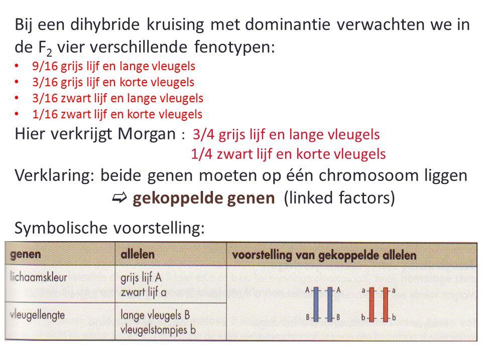 Bij een dihybride kruising met dominantie verwachten we in de F 2 vier verschillende fenotypen: 9/16 grijs lijf en lange vleugels 3/16 grijs lijf en korte vleugels 3/16 zwart lijf en lange vleugels 1/16 zwart lijf en korte vleugels Hier verkrijgt Morgan : 3/4 grijs lijf en lange vleugels 1/4 zwart lijf en korte vleugels Verklaring: beide genen moeten op één chromosoom liggen  gekoppelde genen (linked factors) Symbolische voorstelling: