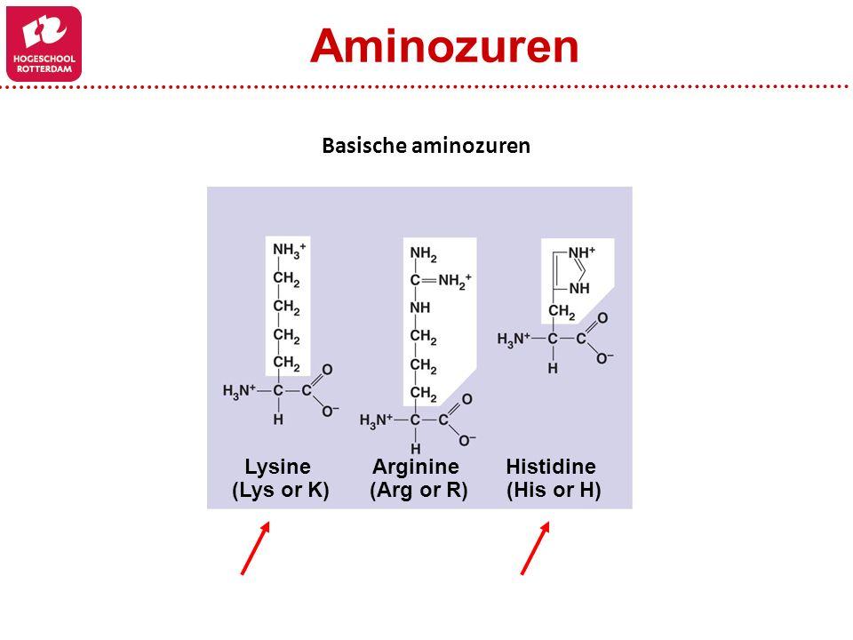 Arginine (Arg or R) Histidine (His or H) Lysine (Lys or K) Basische aminozuren Aminozuren