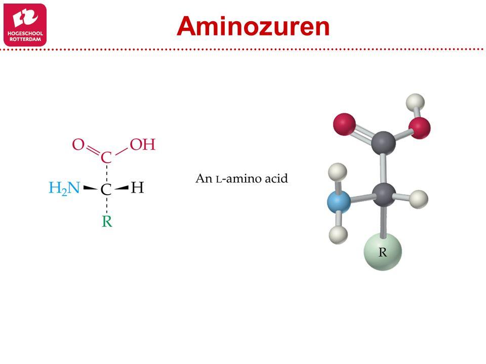 Peptide bond Hydrolyse reactie Serine TyrosineCysteine Zijketens (side chains) Ruggegraad (backbone) Aminozuren
