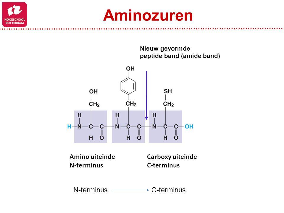 Nieuw gevormde peptide band (amide band) Amino uiteinde N-terminus Carboxy uiteinde C-terminus Aminozuren N-terminus C-terminus