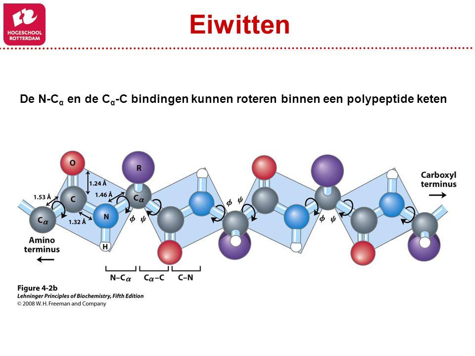 De N-C α en de C α -C bindingen kunnen roteren binnen een polypeptide keten Eiwitten