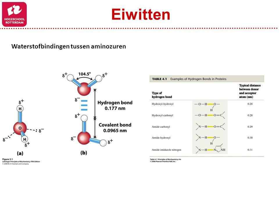 Eiwitten Waterstofbindingen tussen aminozuren