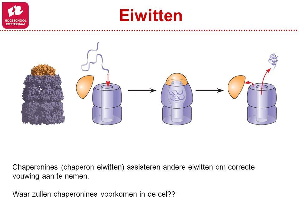 Chaperonines (chaperon eiwitten) assisteren andere eiwitten om correcte vouwing aan te nemen. Waar zullen chaperonines voorkomen in de cel?? Eiwitten