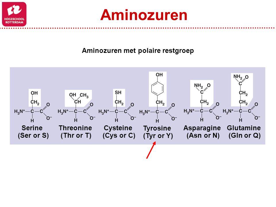 Asparagine (Asn or N) Glutamine (Gln or Q) Serine (Ser or S) Threonine (Thr or T) Cysteine (Cys or C) Tyrosine (Tyr or Y) Aminozuren Aminozuren met po