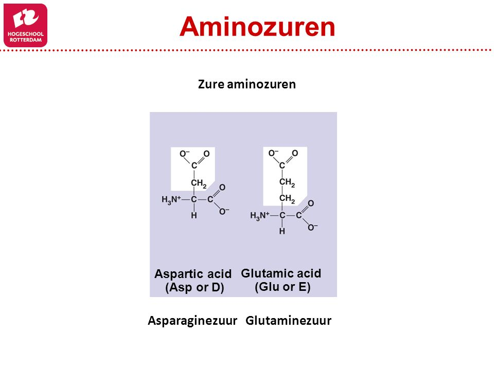 Aspartic acid (Asp or D) Glutamic acid (Glu or E) Zure aminozuren Asparaginezuur Glutaminezuur Aminozuren