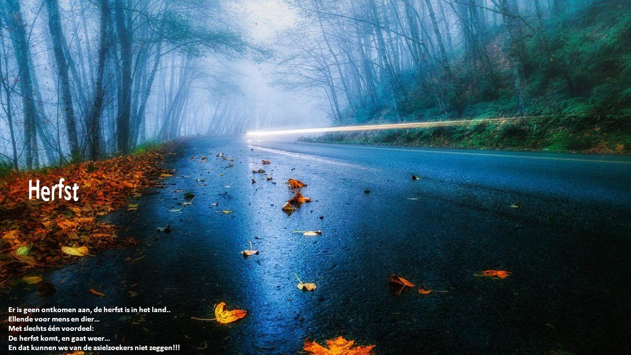 Er is geen ontkomen aan, de herfst is in het land..