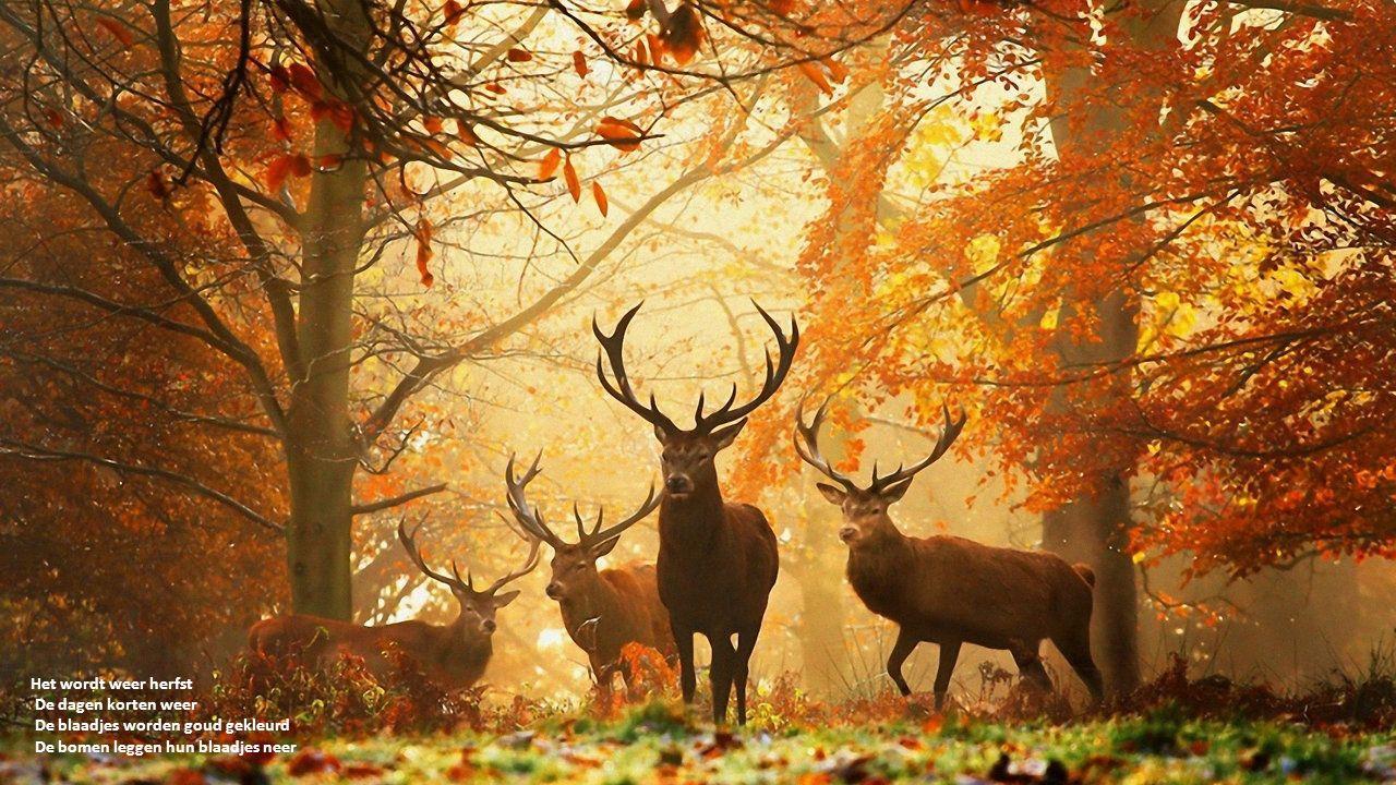 Het wordt weer herfst De dagen korten weer De blaadjes worden goud gekleurd De bomen leggen hun blaadjes neer