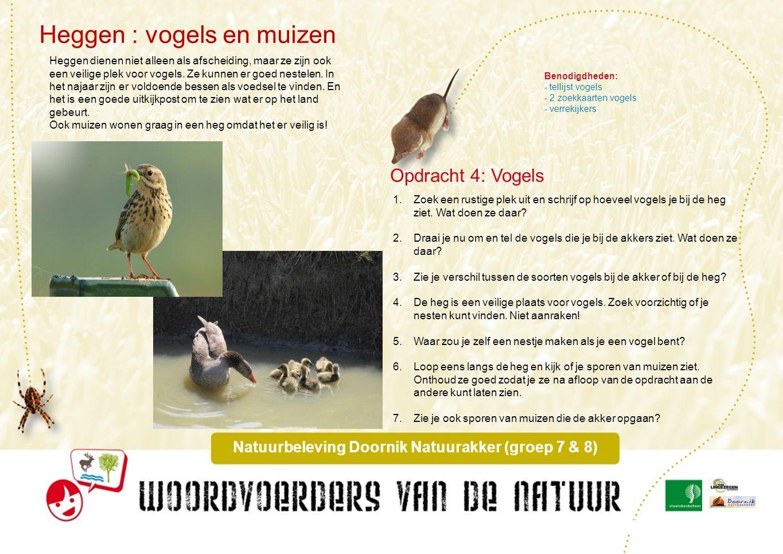 Heggen, insekten & spinnen Natuurbeleving Doornik Natuurakkers (groep 7 & 8) 1.Loop naar de heg en leg er een laken of een open geklapte paraplu onder.