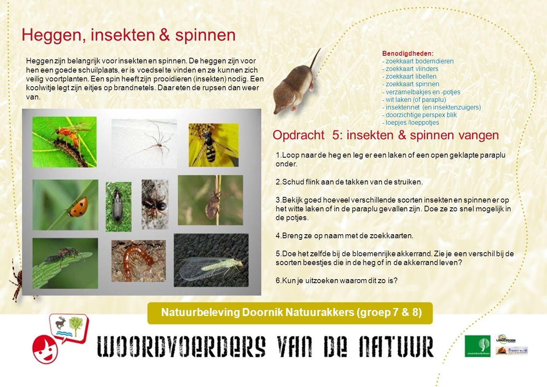 Opdracht 6: bloemen zoeken Bloemenrijke akkerranden Natuurbeleving Doornik Natuurakkers (groep 7 & 8).