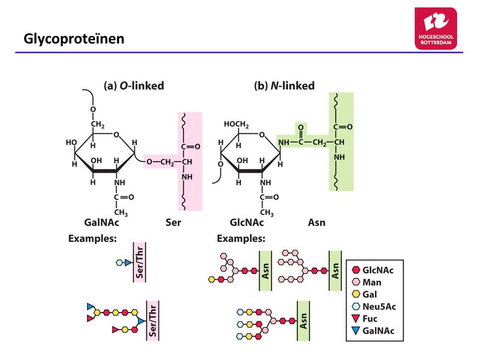 Glycosaminoglycanen Een groep zure heteropolysacchariden die in organismen voorkomen in vrije vorm of als bestanddeel van proteoglycanen Bevatten aminosuikers en glucuronzuur of iduronzuur Meeste polysacchariden zijn veresterd met zwavel (-SO 3 - )