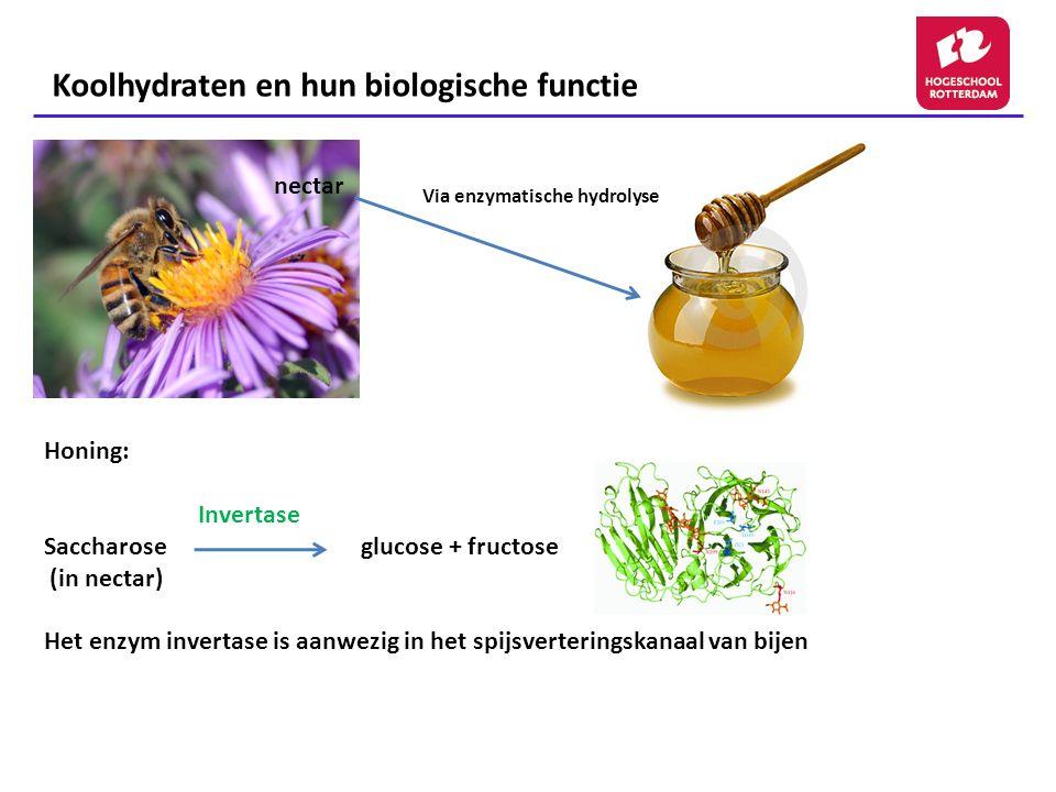 Koolhydraten en hun biologische functie Polysacchariden Onderverdeling in: - Homoglycanen welke zijn opgebouwd uit 1 soort monosacchariden (vb.
