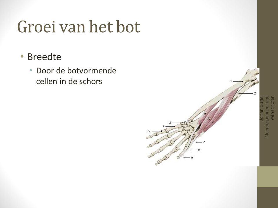 Groei van het bot Lengte Groeischijf aan het eind van het bot Johan bugel Noorderpoortcollege Winschoten