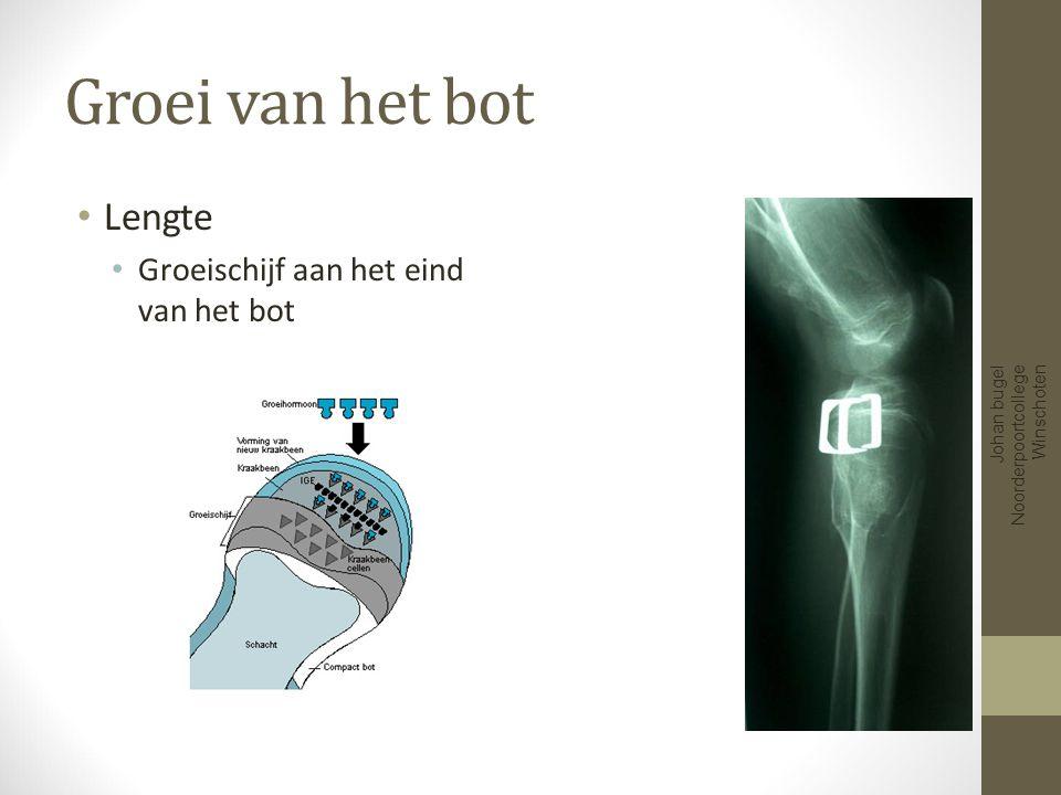 Soorten botten Pijpbeenderen vb Platte beenderen Vb Korte beenderen Vb Onregelmatige beenderen Vb Johan bugel Noorderpoortcollege Winschoten