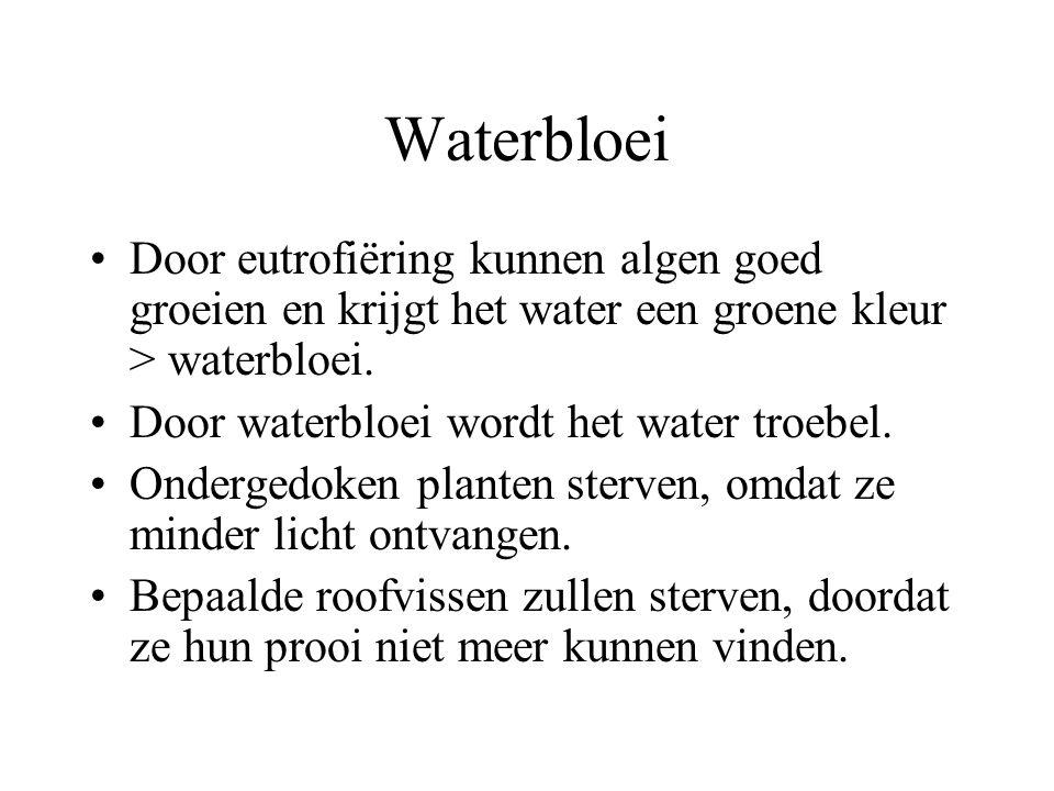 Waterbloei Door eutrofiëring kunnen algen goed groeien en krijgt het water een groene kleur > waterbloei. Door waterbloei wordt het water troebel. Ond