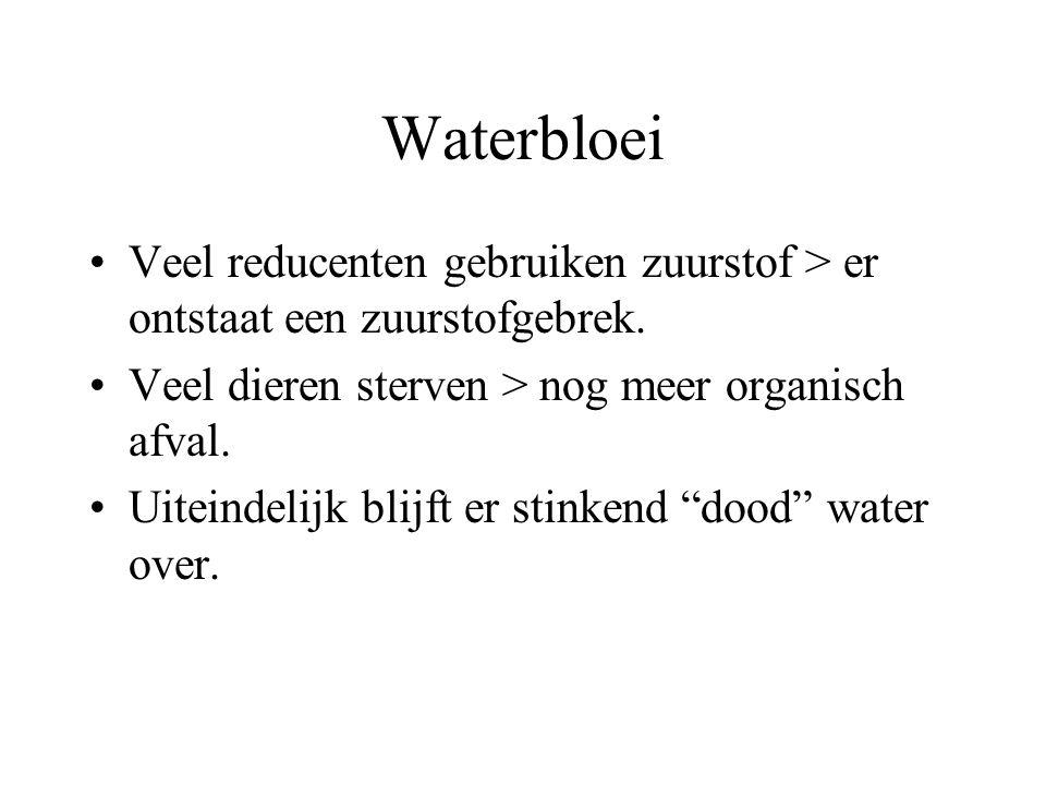 Waterbloei Veel reducenten gebruiken zuurstof > er ontstaat een zuurstofgebrek. Veel dieren sterven > nog meer organisch afval. Uiteindelijk blijft er