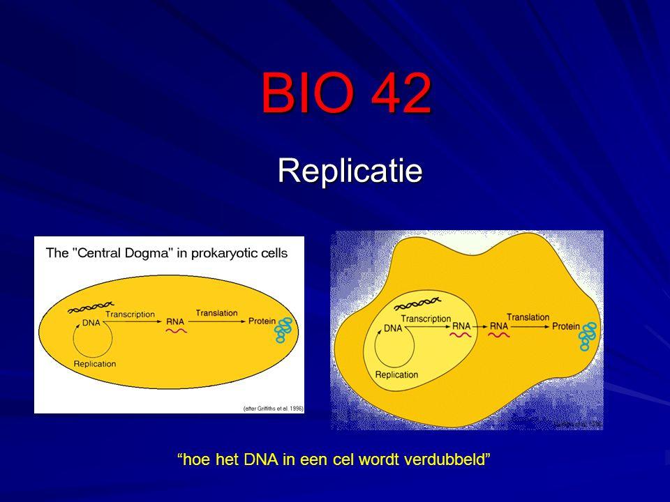 Om de replicatie te kunnen uitvoeren moet de DNA helix (de α helix) worden ontwonden.