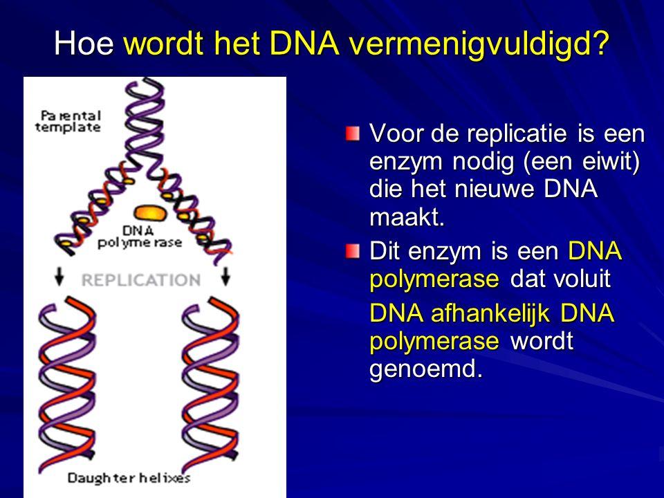 Hoe wordt het DNA vermenigvuldigd.