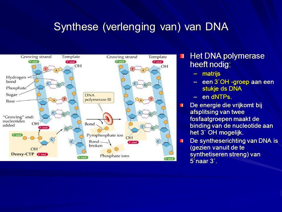Synthese (verlenging van) van DNA Het DNA polymerase heeft nodig: –matrijs –een 3`OH -groep aan een stukje ds DNA –en dNTPs.