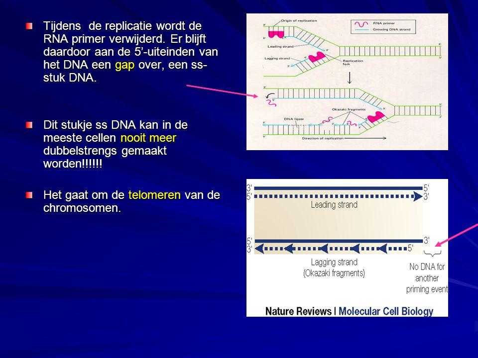 Tijdens de replicatie wordt de RNA primer verwijderd.