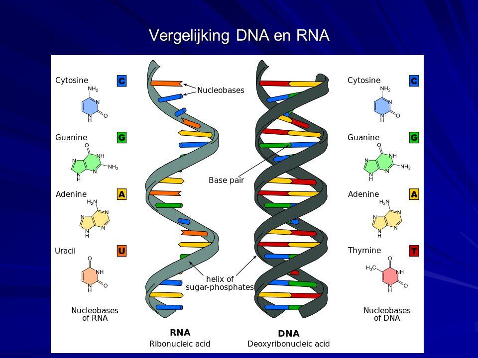 De stikstofbasen A, C, G, T en U kunnen worden onderverdeeld in purines en pyrimidines In DNA komen A, C, G en T voor.