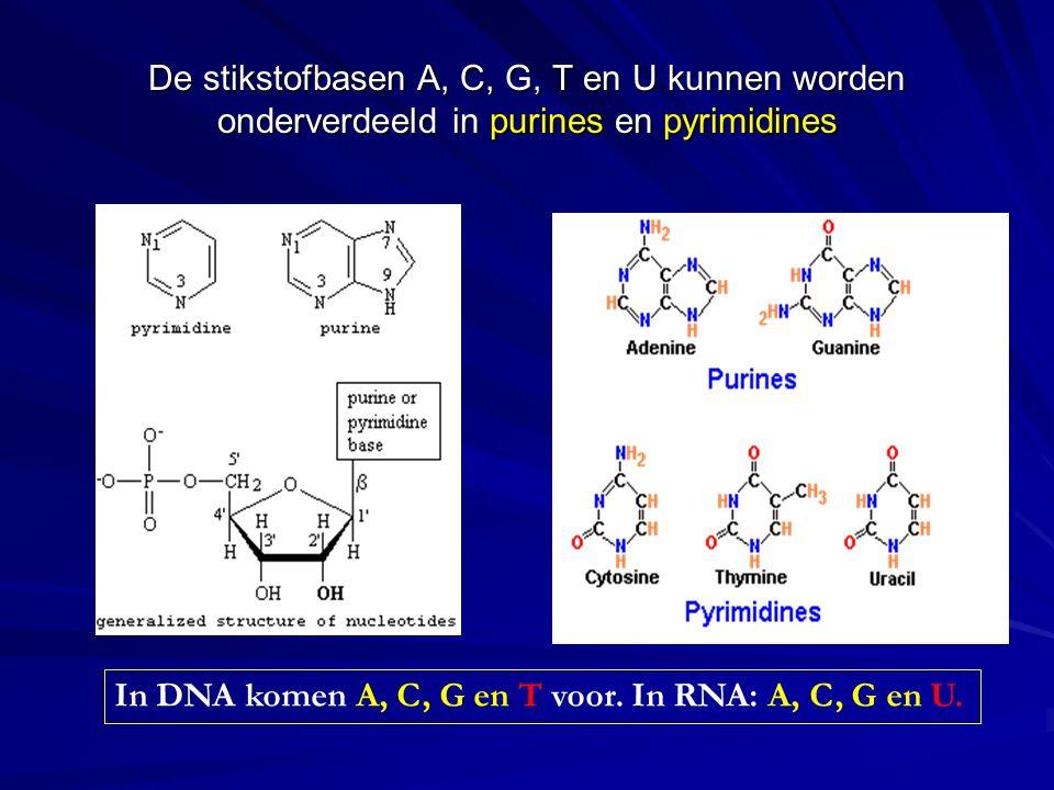 De nucleotiden van RNA en DNA verschillen van elkaar in de suikergroep en in de stikstofbasen.
