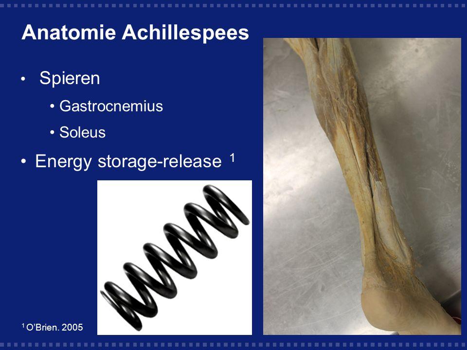 Anatomie Achillespees Spieren Gastrocnemius Soleus Energy storage-release 1 1 O'Brien. 2005