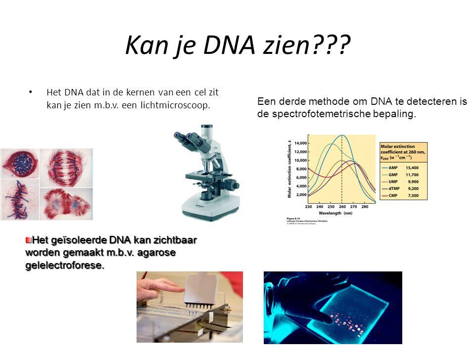 Kan je DNA zien??? Het DNA dat in de kernen van een cel zit kan je zien m.b.v. een lichtmicroscoop. Het geïsoleerde DNA kan zichtbaar worden gemaakt m