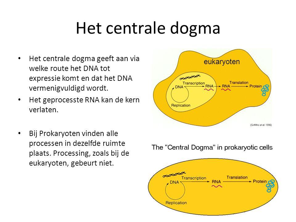 Het centrale dogma Het centrale dogma geeft aan via welke route het DNA tot expressie komt en dat het DNA vermenigvuldigd wordt. Het geprocesste RNA k