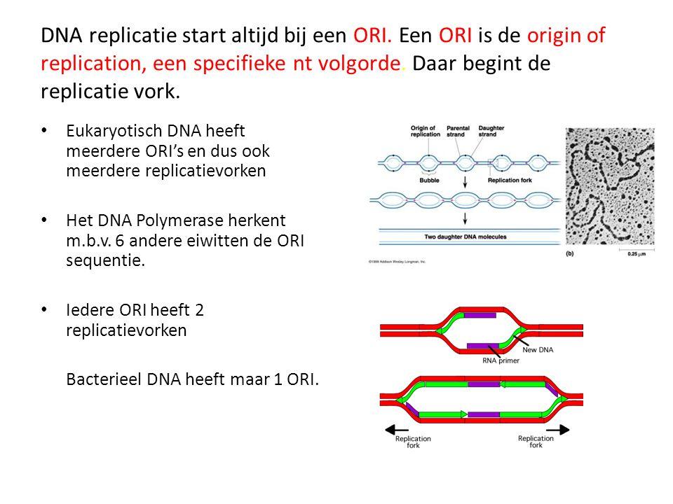 DNA replicatie start altijd bij een ORI. Een ORI is de origin of replication, een specifieke nt volgorde. Daar begint de replicatie vork. Eukaryotisch