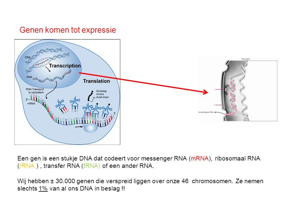 Genen komen tot expressie Een gen is een stukje DNA dat codeert voor messenger RNA (mRNA), ribosomaal RNA (rRNA ), transfer RNA (tRNA) of een ander RN