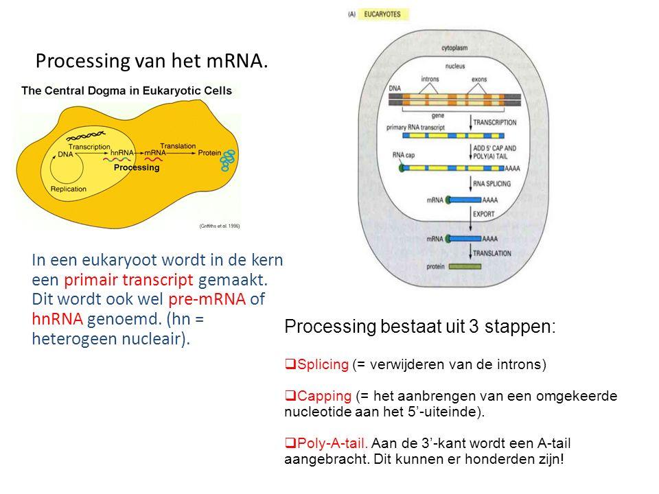Processing van het mRNA. In een eukaryoot wordt in de kern een primair transcript gemaakt. Dit wordt ook wel pre-mRNA of hnRNA genoemd. (hn = heteroge