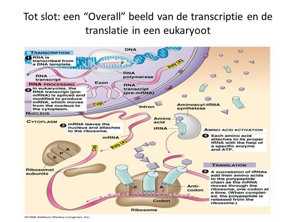"""Tot slot: een """"Overall"""" beeld van de transcriptie en de translatie in een eukaryoot"""