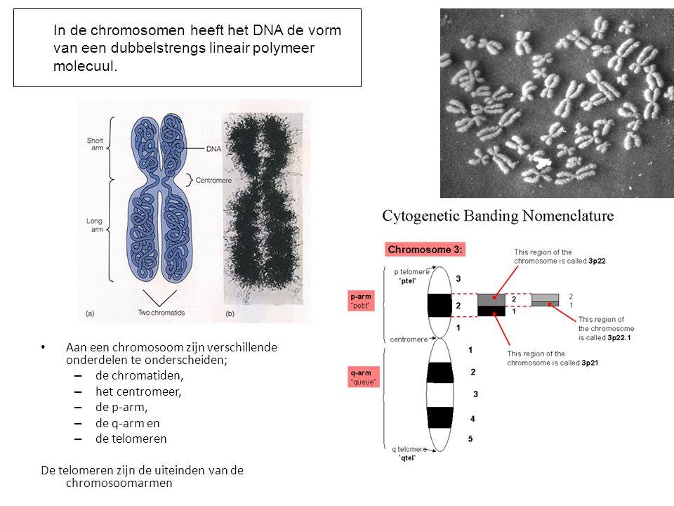 Aan een chromosoom zijn verschillende onderdelen te onderscheiden; – de chromatiden, – het centromeer, – de p-arm, – de q-arm en – de telomeren De tel