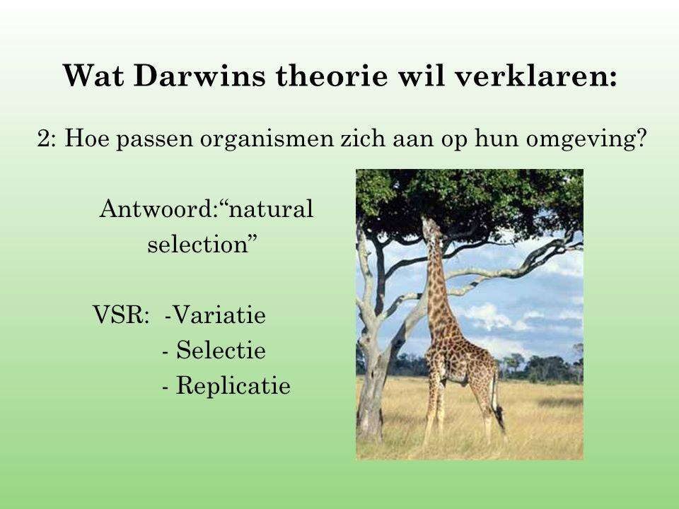 """Wat Darwins theorie wil verklaren: 2: Hoe passen organismen zich aan op hun omgeving? Antwoord:""""natural selection"""" VSR: -Variatie - Selectie - Replica"""