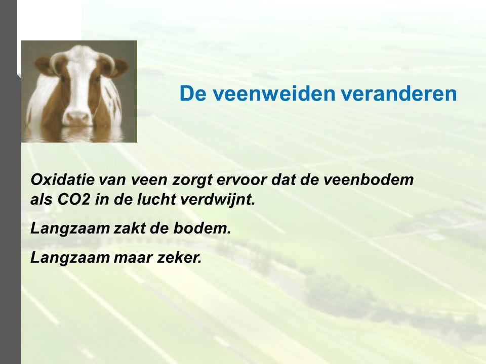 Oxidatie van veen zorgt ervoor dat de veenbodem als CO2 in de lucht verdwijnt. Langzaam zakt de bodem. Langzaam maar zeker. De veenweiden veranderen