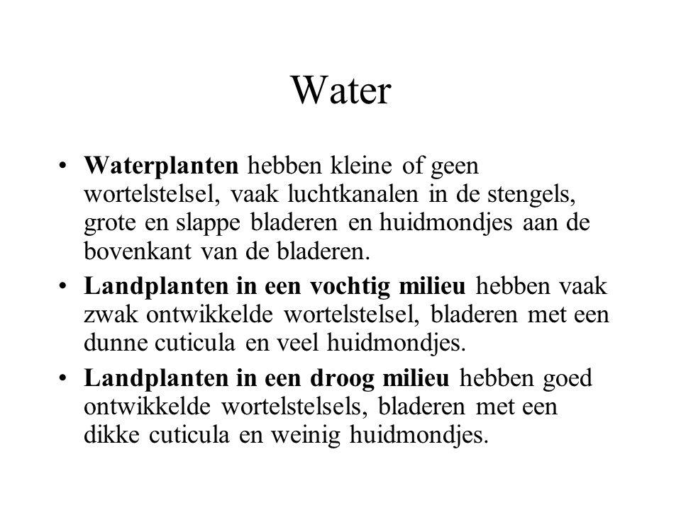 Water Waterplanten hebben kleine of geen wortelstelsel, vaak luchtkanalen in de stengels, grote en slappe bladeren en huidmondjes aan de bovenkant van de bladeren.